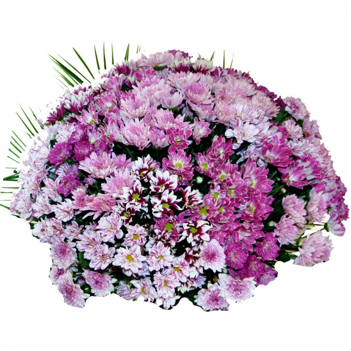 Букет 55 розови хризантеми