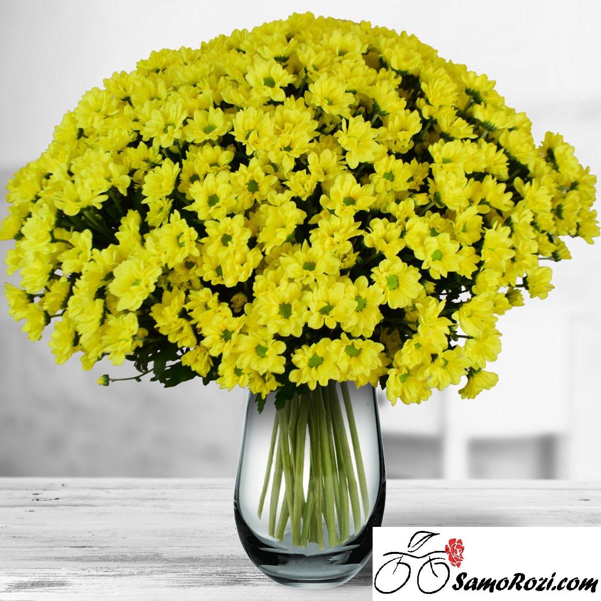 Букет 75 жълти хризантеми