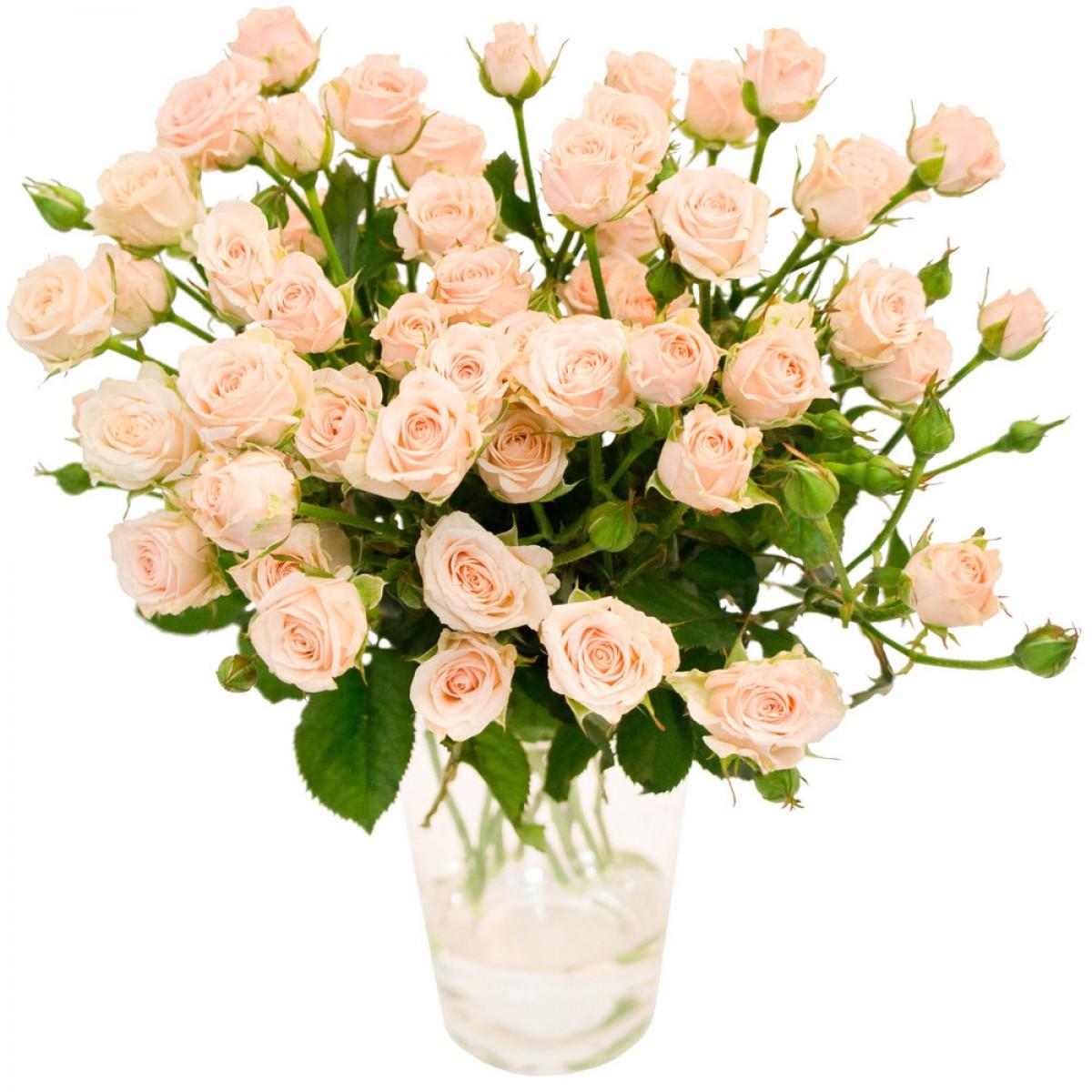 Букет от 15 до 25 кремави спрей рози (ти избираш броя)