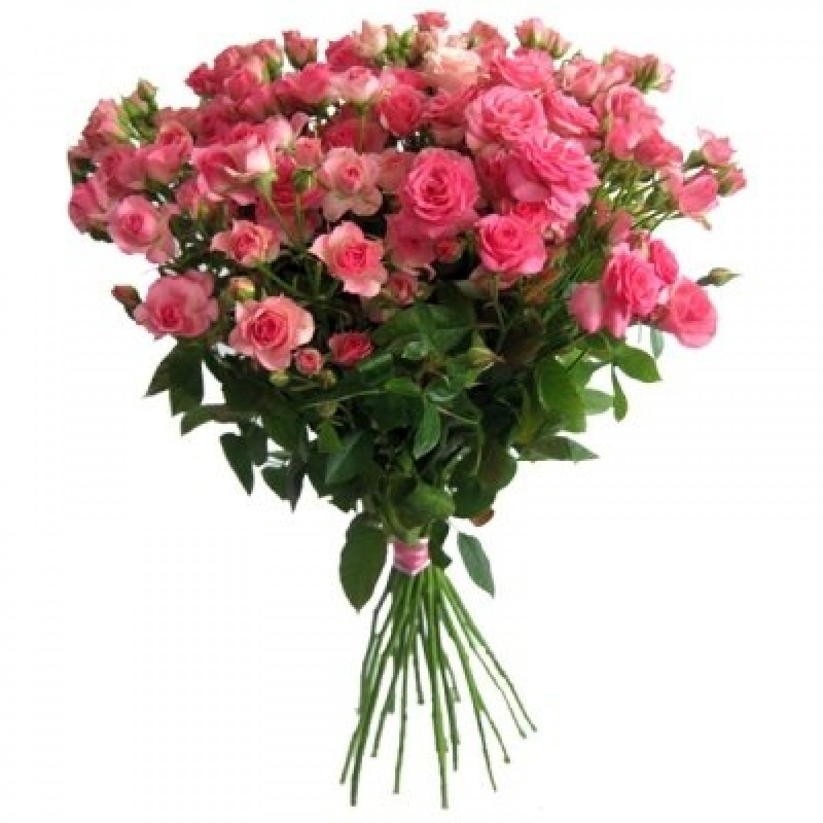 Букет от 11 до 15 розови спрей рози (ти избираш броя)