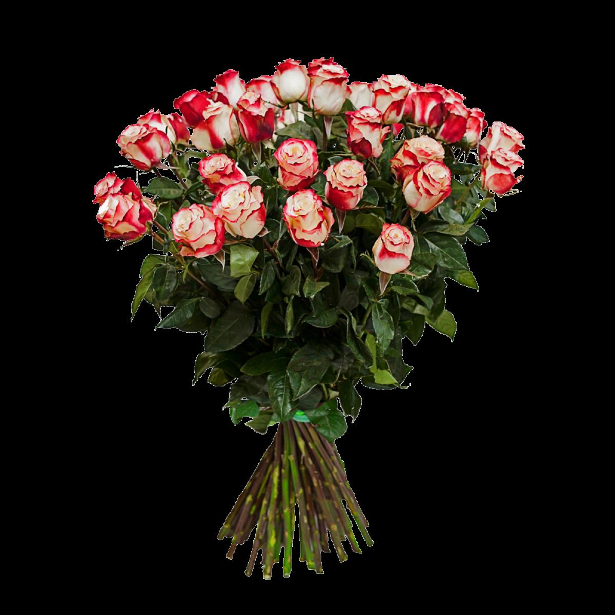 Букет от 25 до 51 биколорни бяло/червени рози (ти избираш броя)