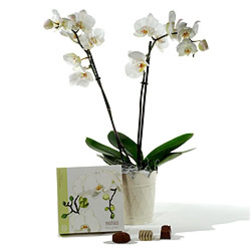 Екзотична орхидея & Шоколади