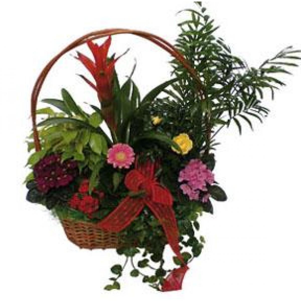 Аранжировка от саксийни цветя