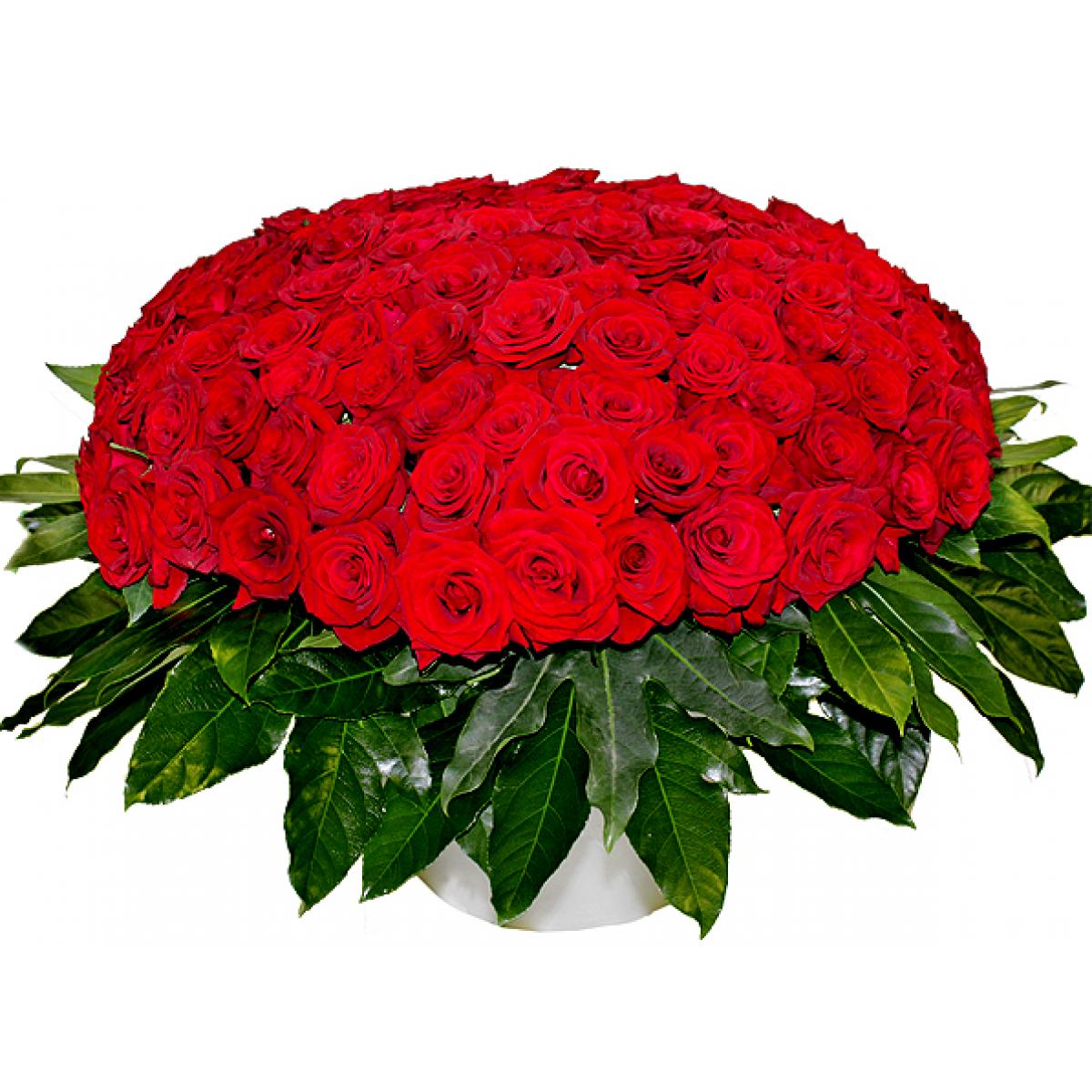 Композиция от 501 червени рози