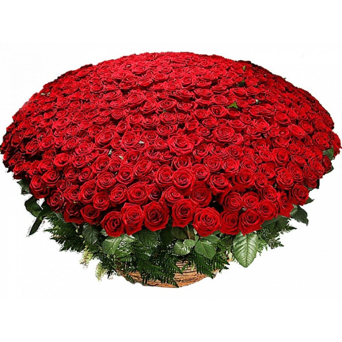 Кошница от 501 червени рози
