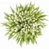 Лалета за оссми март - Букет от бели лалета - брой по Ваше желание