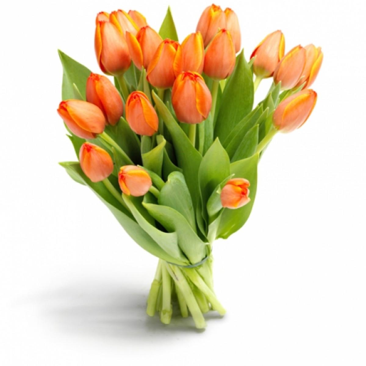 19 оранжеви лалета