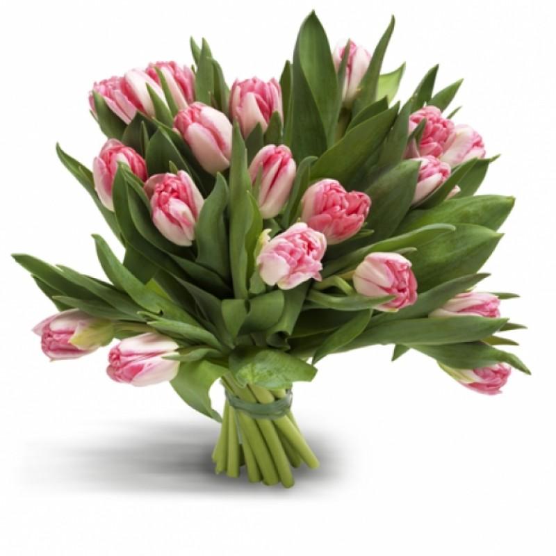 ЦВЕТЯ - 19 розови лалета