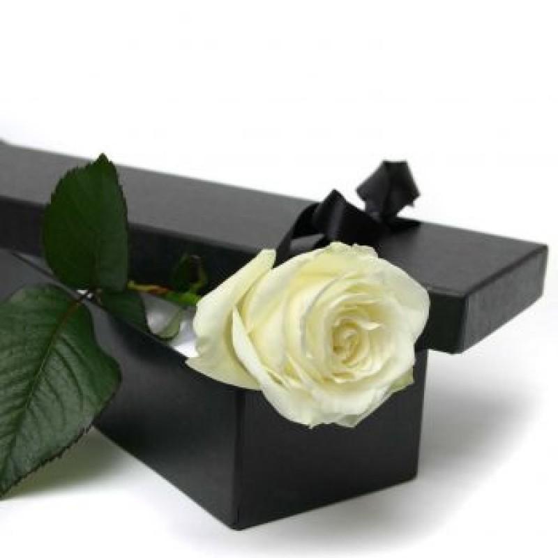 ВСИЧКИ БУКЕТИ РОЗИ - 1 бяла роза в стилна кутия