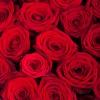 Сърце от 25 червени рози